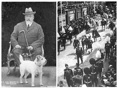 King Edward VII with your wirefoxterrier Caesar of Notts